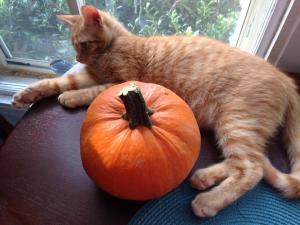 daisy pumpkin